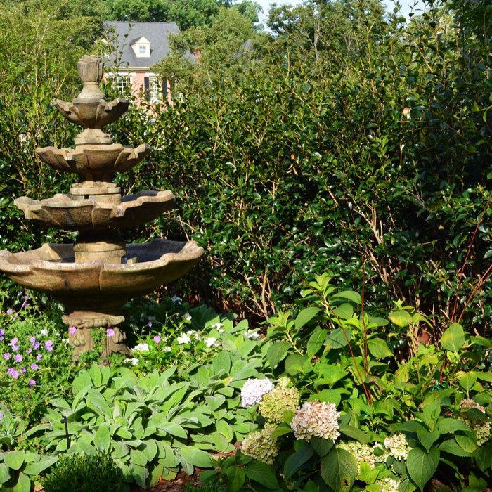 Evergreen Ornamentals in Courtyard