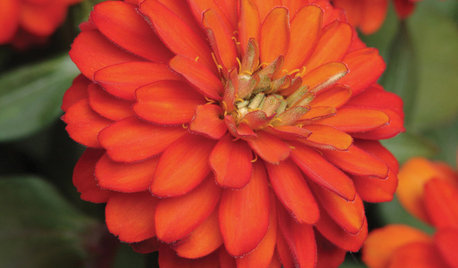 Budget Gardener: 8 Easy Container Plants to Grow From Seed