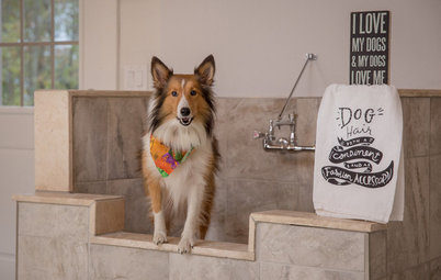 How to Install a Dog-Washing Station