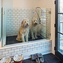 doggie wash