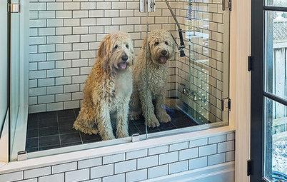 Houzz Call: Wie wohnt Ihr Haustier? Zeigen Sie uns Fotos!