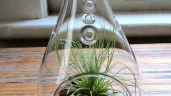 Air Plant Terrarium Design