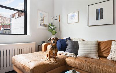 Tierfrei wohnen – ein Trend im Interieur?