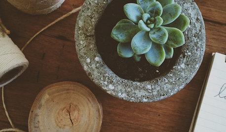 Grøn trend: Alt du skal vide om de 8 mest populære planter