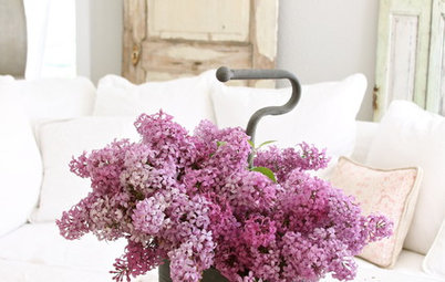 Let Lilac Love Flower This Spring