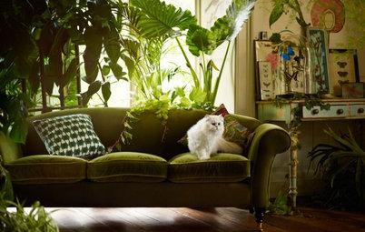 Азбука растениевода: Комнатные растения для темных помещений