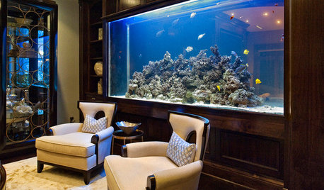 Tank Up on These 5 Pointers Before You Set Up an Aquarium