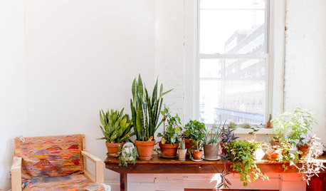 5 Tips to Keep Your Indoor Succulents Thriving