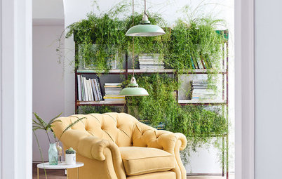 10 Ways to Display Hanging, Trailing & Cascading Plants Indoors