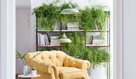 10 Ideas for Hanging, Trailing and Cascading Indoor Plants