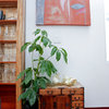 Meet a Houseplant That Doesn