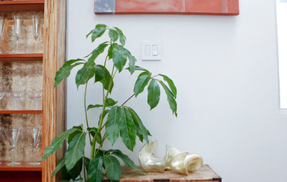 Nice Houseplants Meet a Houseplant That Doesn ut Mind Neglect
