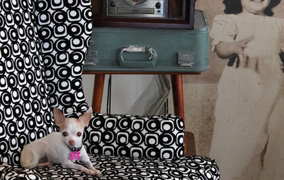 What Chihuahuas Can Teach Us About Interior Design