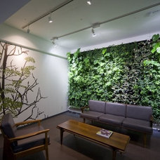 Modern Living Room Green Walls