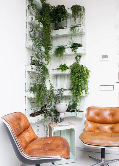 Efeu Zimmerpflanze efeu als zimmerpflanze die league der indoor dschungel