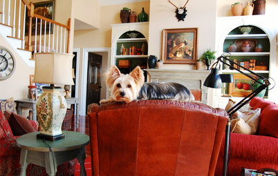 The Best of My Houzz: 50 Design-Loving Pets