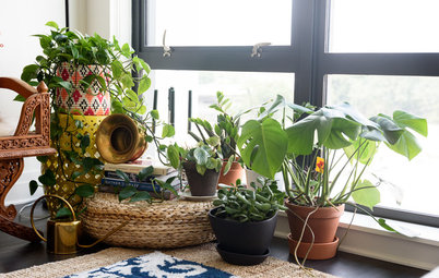 My Houzz: D.C. Baker's Apartment Is a Plant-Filled Oasis