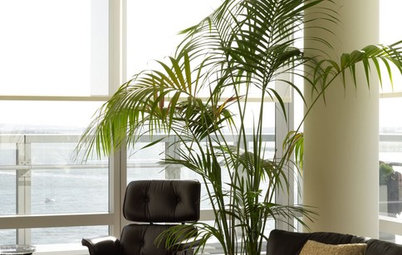 Palm Trees Take Interiors on a Tropical Vacation