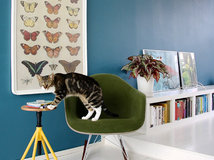 12 character filled spaces for pets in the home