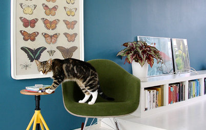 10 Cats That Have Made Themselves Right at Home
