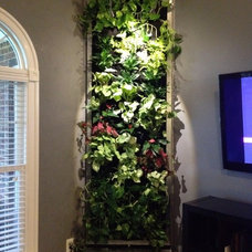Contemporary Living Room by Vertical Gardens, LLC