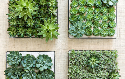 Succulents in Containers: The Ultimate Easy-Care Mini Garden