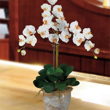 White Phalaenopsis Orchid for Asian Living Room