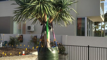 Mooloolaba Dracaena Draco supply and installation