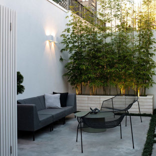 This is an example of a small contemporary backyard patio in Sydney with concrete slab and no cover.