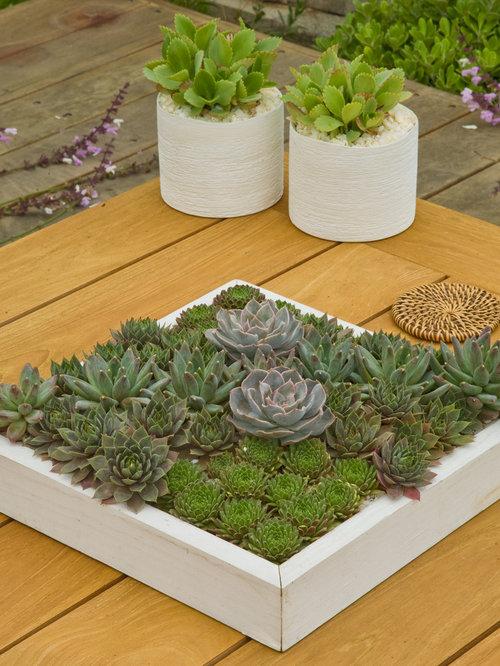 Succulent dish garden home design ideas pictures remodel for Succulent dish garden designs