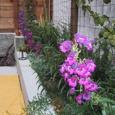 Modern Patio by SB Garden Design