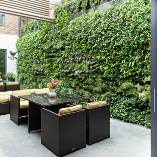 This is an example of a contemporary courtyard patio in London with a vertical garden and concrete slab.