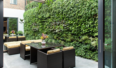 How to Create Privacy in a Small Urban Garden