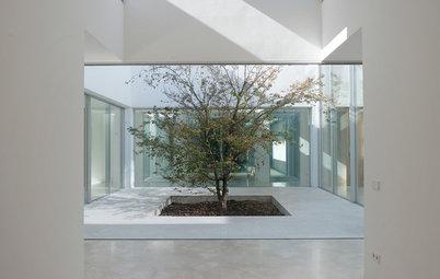 Plantas y árboles para diseñar el perfecto jardín interior