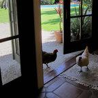 Outdoor Living Mediterranean Patio Los Angeles By