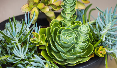 Gardening 101: What to Know About Propagating Succulents