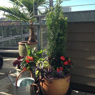 Diseño de patio clásico renovado, pequeño, sin cubierta, con jardín de macetas y adoquines de hormigón