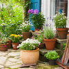 Going on Vacation? Here's How to Make Sure Your Garden Survives