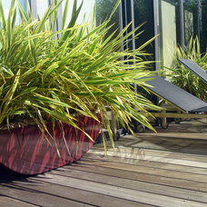 Contemporary Patio by MyLandscapes - Amir Schlezinger