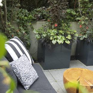Patio container garden - mid-sized contemporary courtyard concrete paver patio container garden idea in Vancouver with no cover