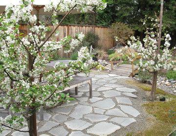 Crabapple tree bosque in bloom