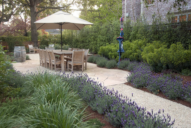 How To Grow Lavender Houzz