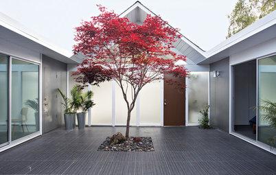 Välj rätt träd för en liten eller mellanstor trädgård