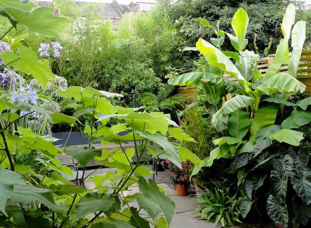 12 der sch nsten gro en zimmerpflanzen f rs wohnzimmer - Wolfsmilch zimmerpflanze ...