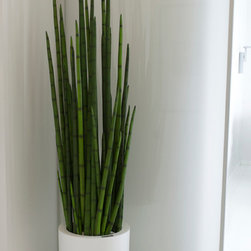 Emilio Robba Snake Grass in Neo Container - 1-844-377-2747