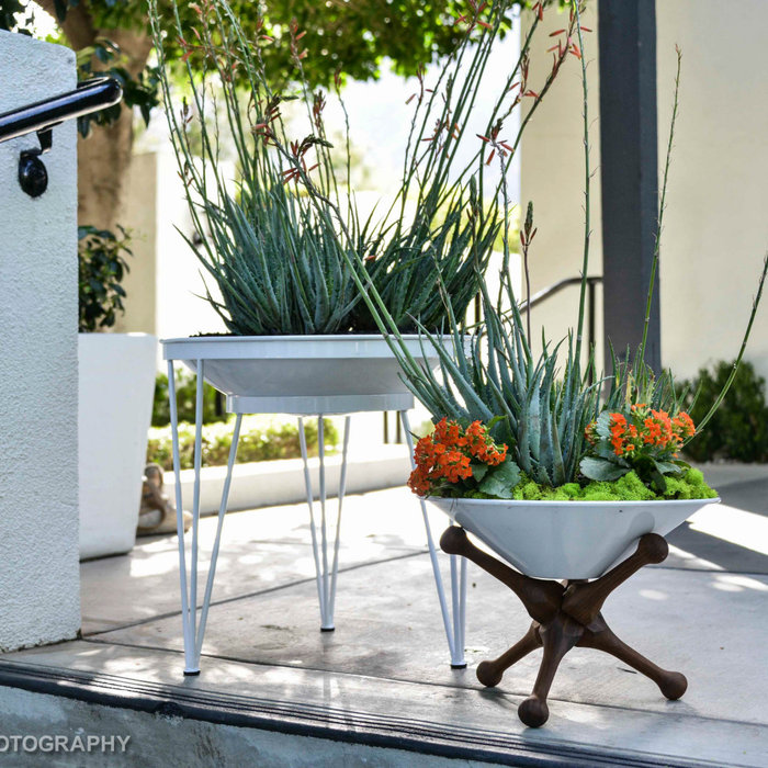 Exterior styling project at the Avalon Hotel in Palm Springs, CA. for Modernism Week using the Steel Life planter line.