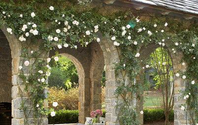 Great Design Plant: Rosa Banksiae a Low-Maintenance Beauty