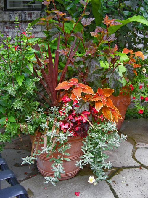 trailing plants home design ideas renovations photos. Black Bedroom Furniture Sets. Home Design Ideas