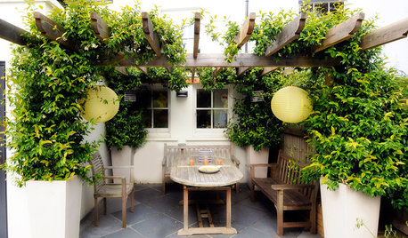 Can a Pergola Work in a Small Yard?