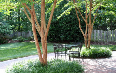 5 Best-Behaved Trees to Grace a Patio